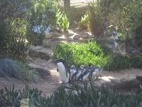 penguinr