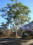 treer