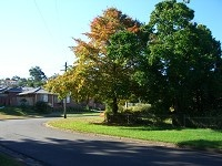 tree4r
